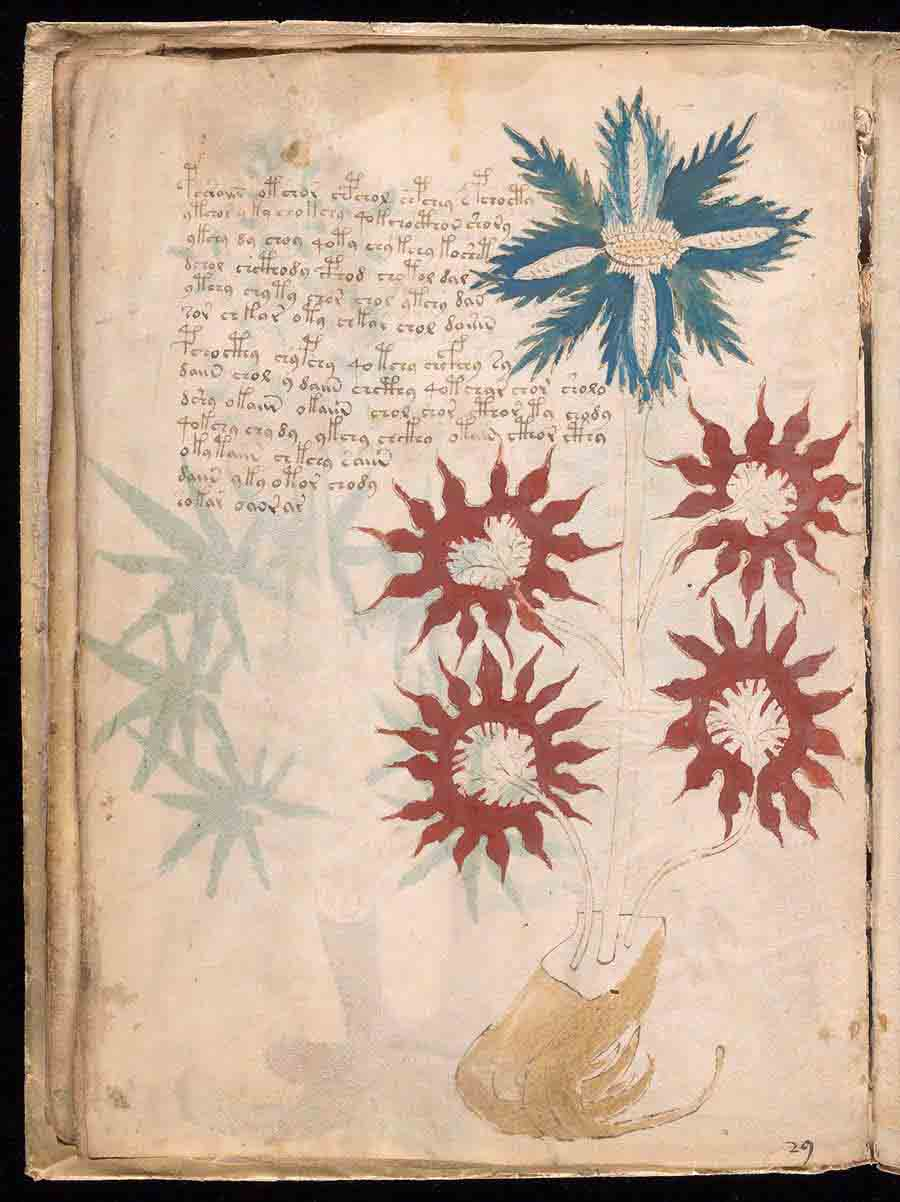 Manoscritto di Voynich girasoli